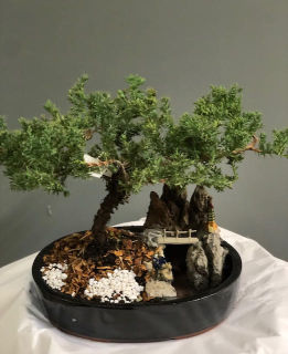 Juniper and Pond Bonsai