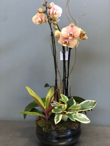 Peach Orchid Planter