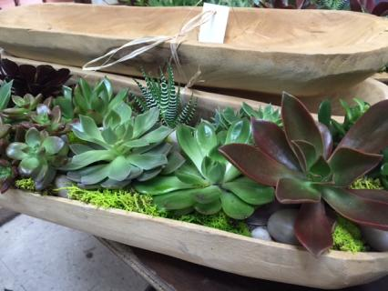 Succulent Planter in Wooden Bowl