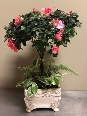 Azalea Tree Planter
