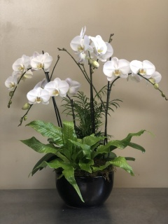 4 Spike Orchid Planter