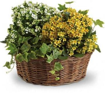 Basket of Joy Planter