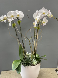 Grand Orchid planter
