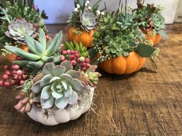 Mini Succulent Pumpkin