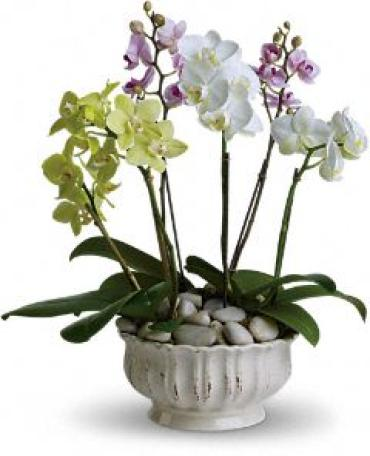 Lovely Orchid Planter