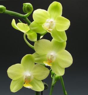 Green Orchid Planter