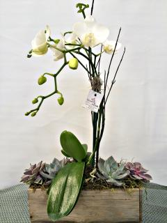 Orchid Woodland Planter